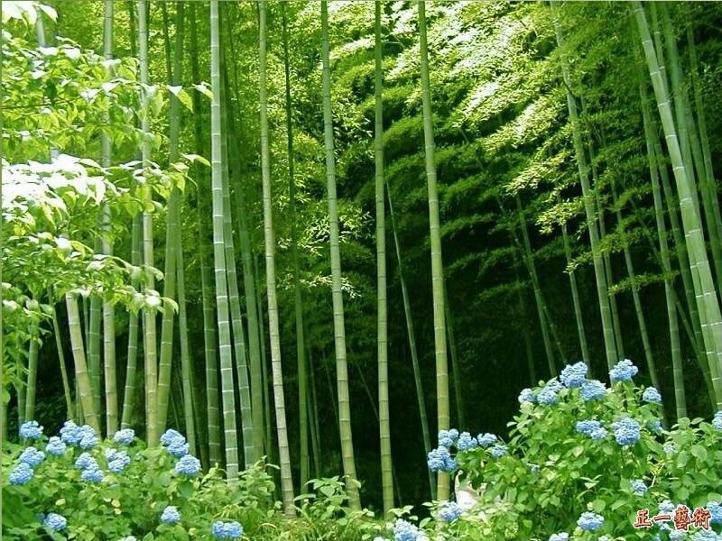 竹の画像 p1_8